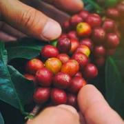 mariposa_narocnina_na_prazeno_kavo